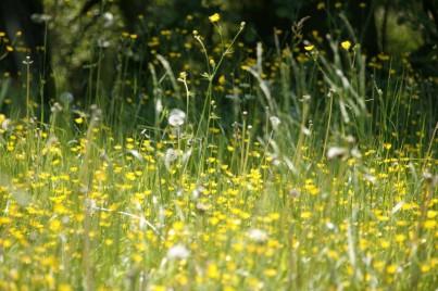 Jak vyzrát na jarní alergie