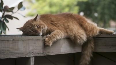 Letní únava – 5 tipů, jak s ní zatočit